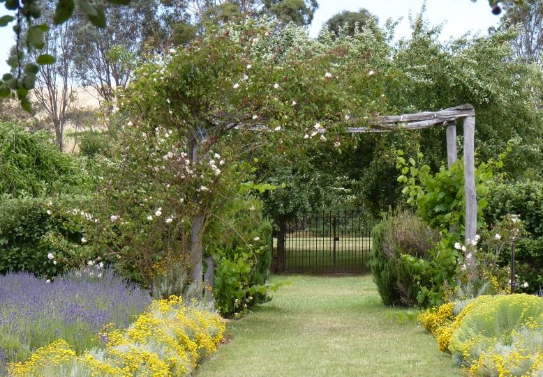 Lavandula gardens