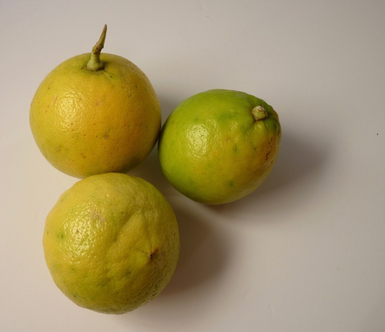 Bergamot oranges fruit